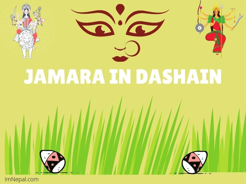 Jamara in Dashain